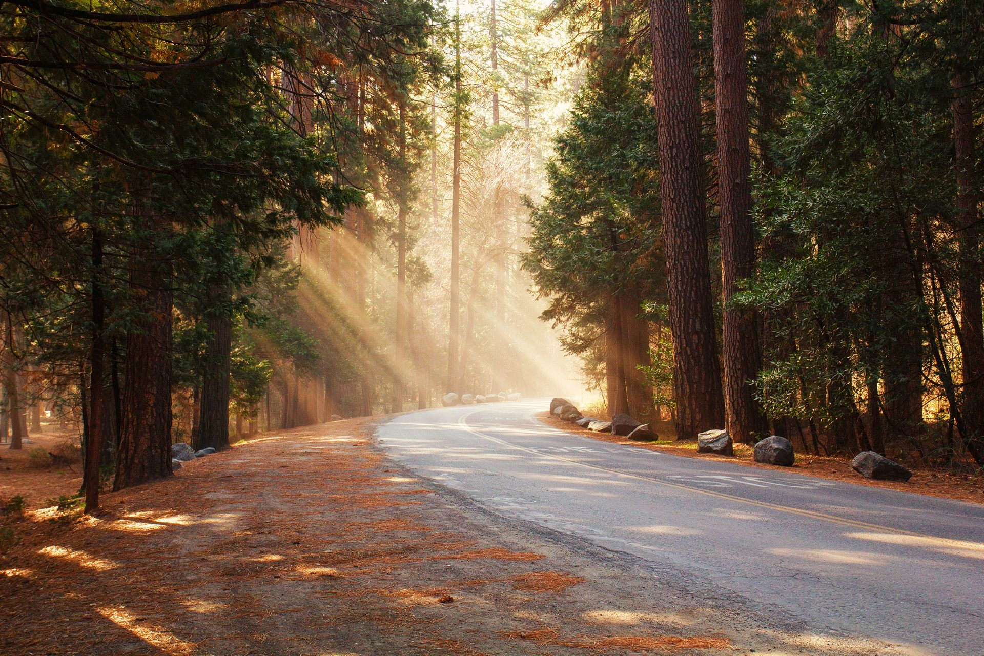 beams, light, sunrays, treee, forest, street, landscape, scenic, earthporn, landscape photography