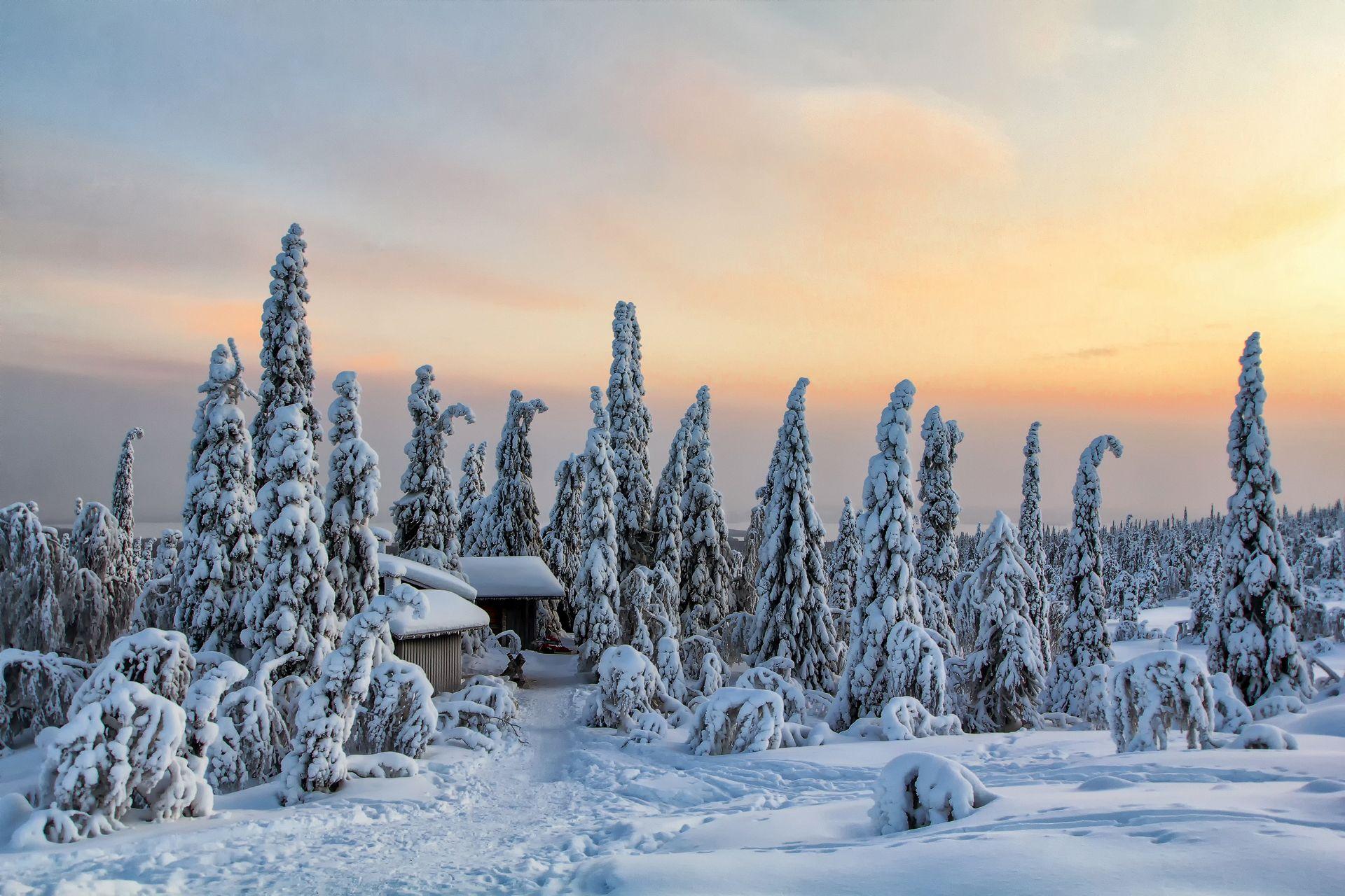 Winter Cabin, Riisitunturi National Park | Posio, Finnish Lapland, Finland