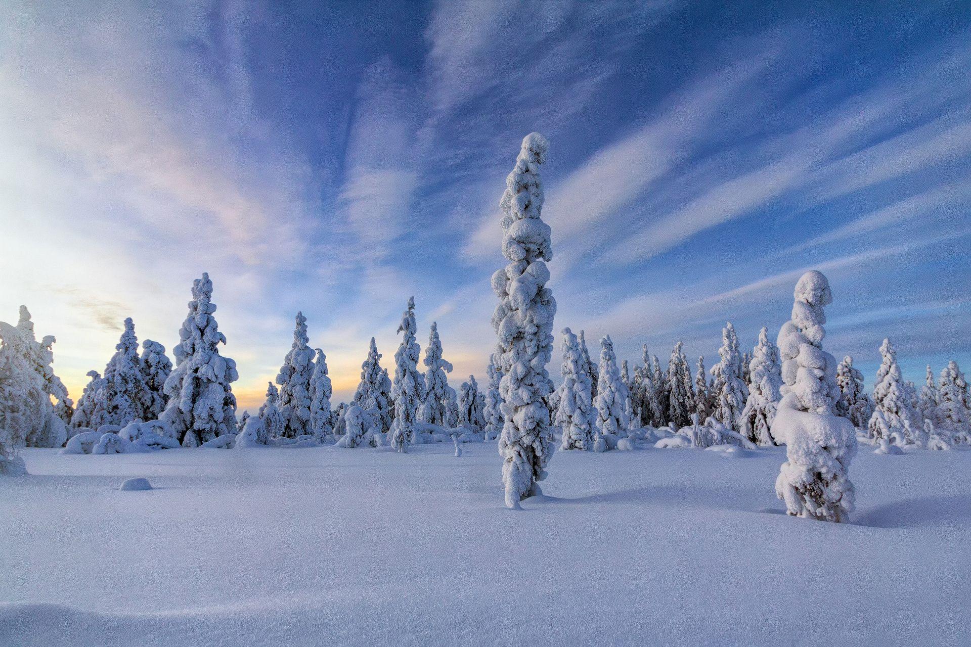 snow trees, winterwonderland, ice, sunset, coverd in snow, snow forest